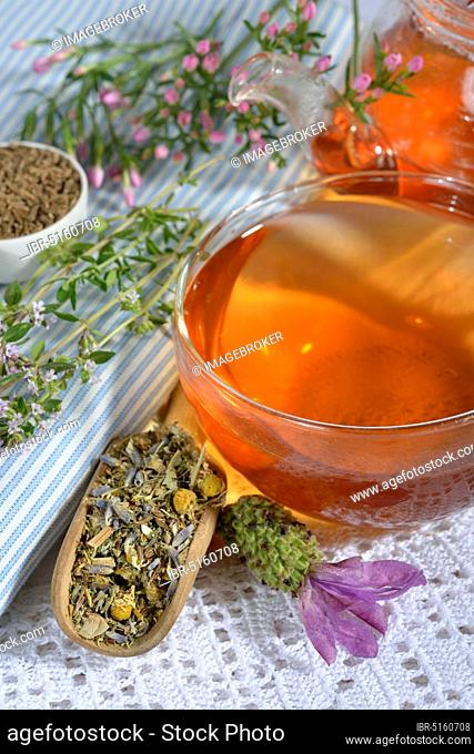 Stomach tea, Cnicus (Cnicus benedictus), Centaurium pulchellum, chamomile, chamomile flowers, thyme leaves, fruits, Caraway, aniseed fruits, aniseed