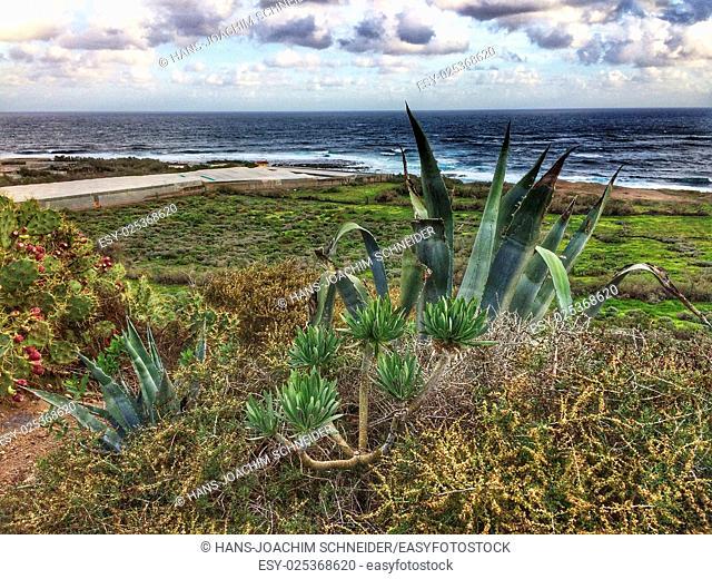 Tenerife wild coast in Hidalgo