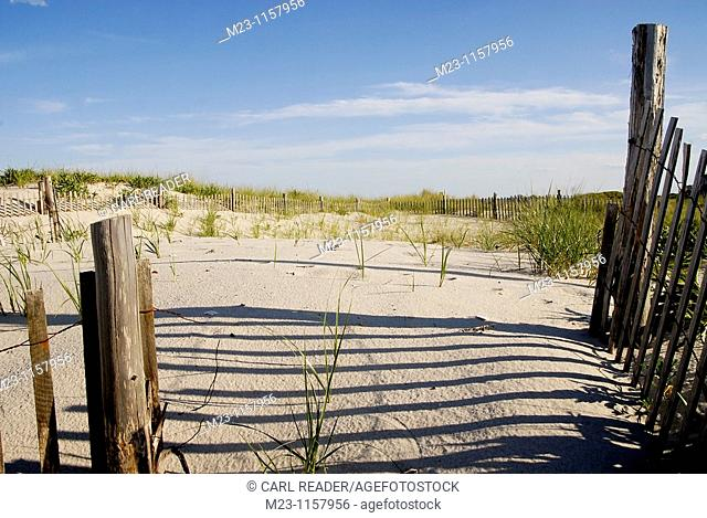Fences help hold together the dunes, Long Beach Island, New Jersey, USA