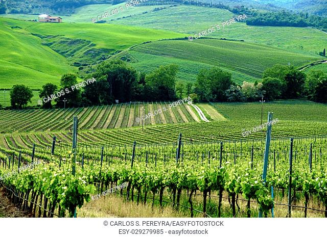 Scenery near to Montepulciano, Tuscany. The area is part of the Val d'Orcia