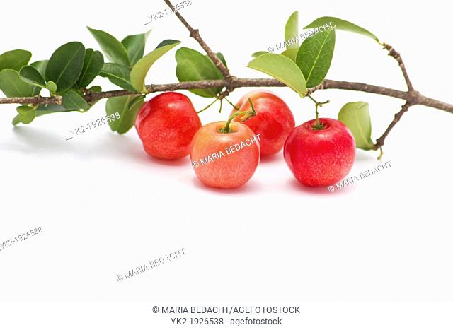 Acerola berries on white background
