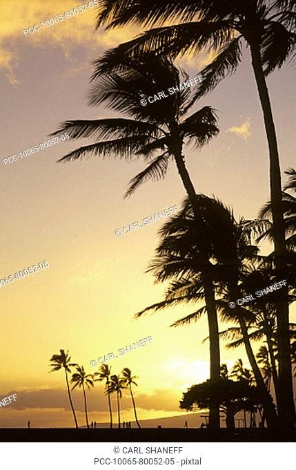 Palm trees and yellow sunset sky with sunball, silhouette of people on the beach