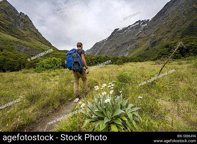 Hiker on Hiking Trail, Gertrude Saddle Route, Fiordland National Park, Southland, New Zealand, Oceania