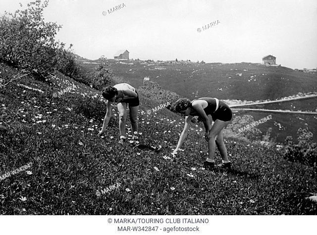 italia, trentino, monte bondone, raccolta di ranuncoli, 1930-40 // italy, trentino, monte bondone, collection of buttercups, 1930-40