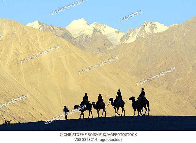 India, Jammu & Kashmir, Ladakh, Nubra valley, Hundar, Caravan of Bactrian camels at sunset