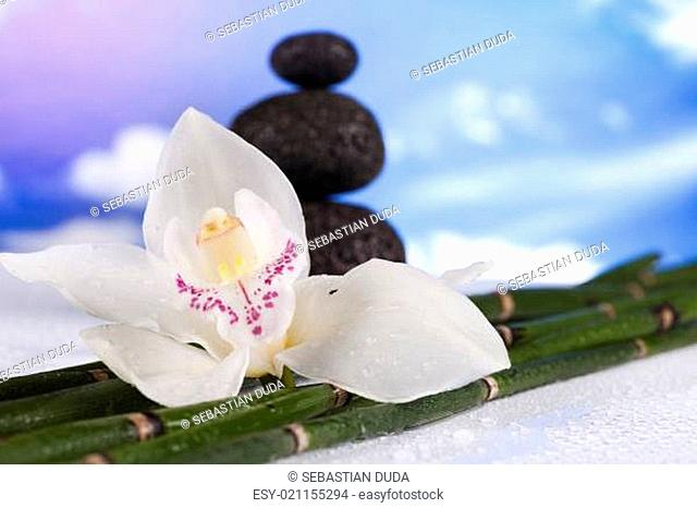 Still life, with orchid flower, zen