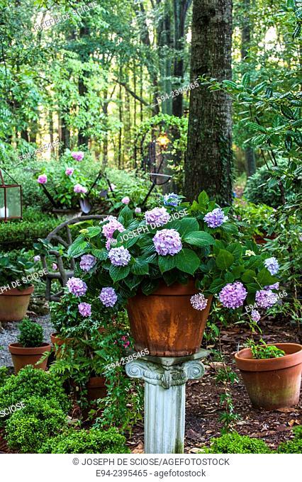 Outdoor living space in a garden setting featuring a hydrangea in a pot on a pedestal.Georgia USA