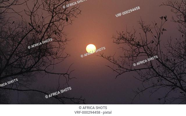 Sunset/sunrise in the African bushveld. Thorn trees, silhouette. South Africa