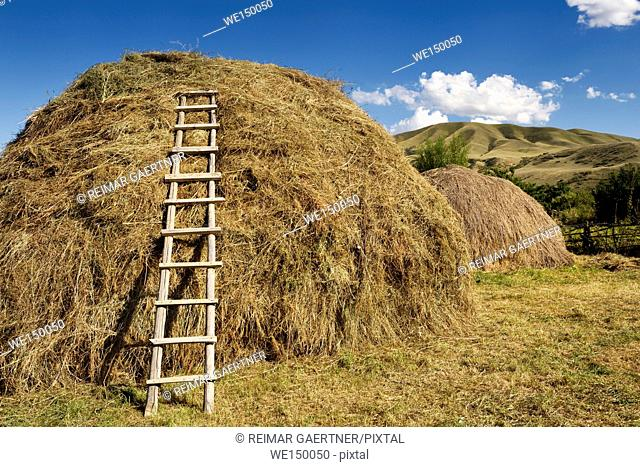 Hay pile with ladder in rural village of Saty on the Chilik river Kazakhstan