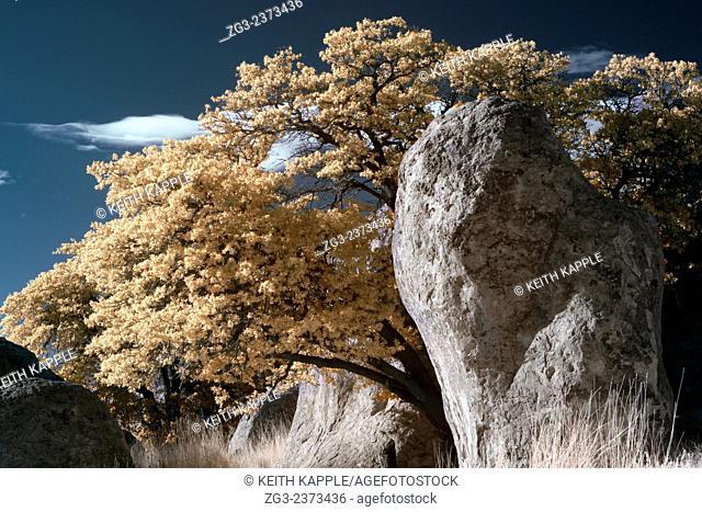 City of Rocks New Mexico