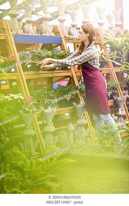 Woman putting plant pots on stand in garden centre