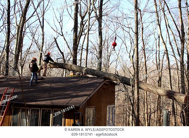 workers in orange hard hats on roof of house helping remove fallen tree from roof, attaching crane hook to tree, damage to structure visible, winter forest