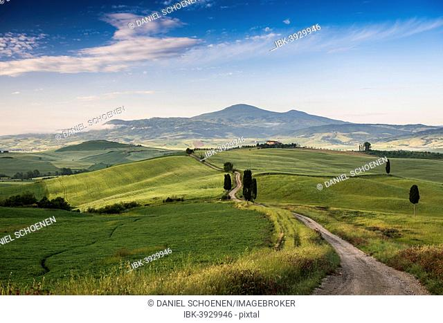 Landscape with hills and cypress trees, morning light, Val d'Orcia, UNESCO World Heritage Site, near Pienza, Province of Siena, Tuscany, Italy
