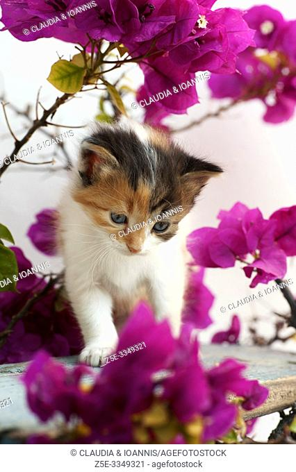 A calico kitten is sitting in a flowering plant outdoors