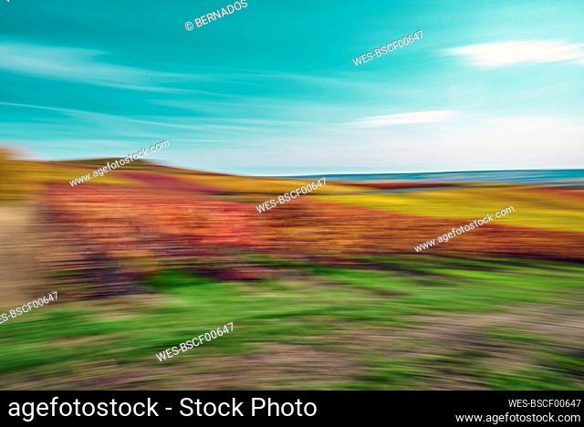 Landscape of wine field