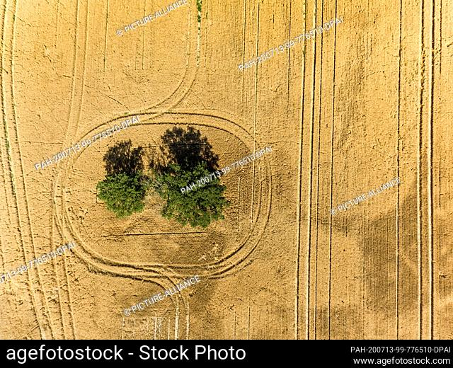 13 July 2020, Saxony, Pödelwitz: A farmer has left tracks in a grain field with his vehicles while driving around a group of trees