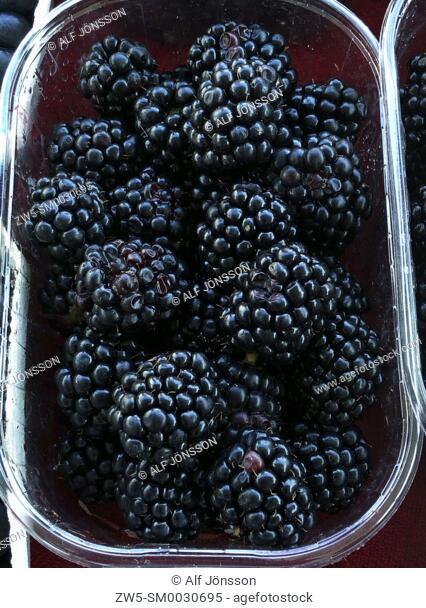Blackberry (Rubus fruticos) in a box for sale