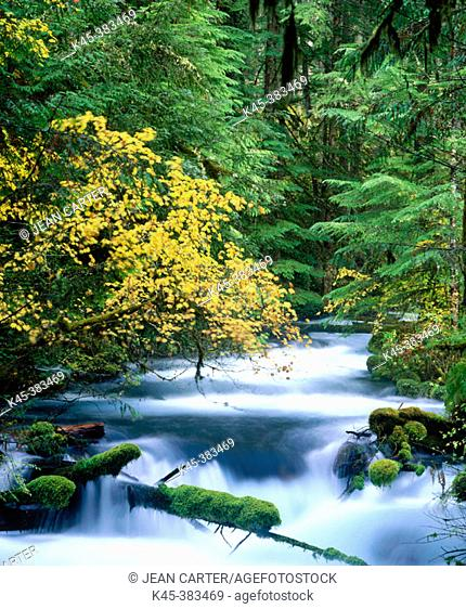Olallie Creek, Willamette National Forest. Oregon. USA