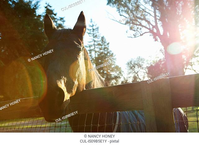 Horse looking over fence