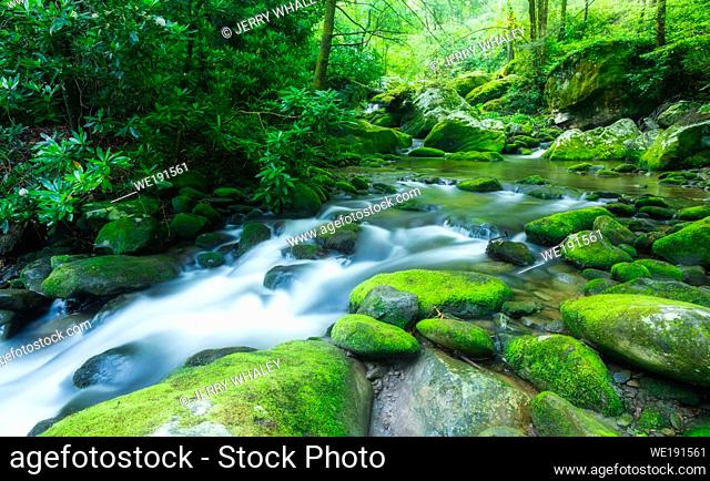 Late Spring along the Roaring Fork, a stream in the Great Smoky Mountains