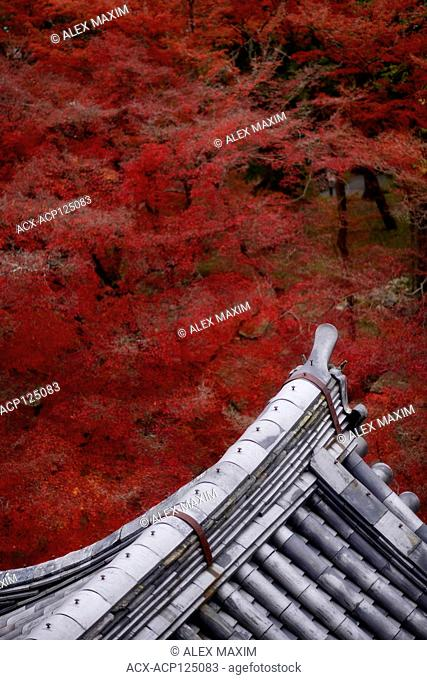 Artistic view of traditional Japanese temple building roof with clay tile, Kawara, in colorful autumn scenery at Nanzen-ji Zen Buddhist temple complex in Kyoto