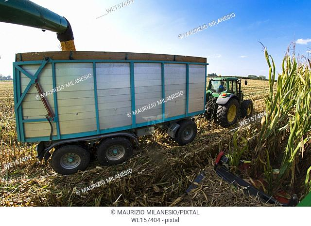 Piedmont, Italy, View from the combine to the trailer and the tractor on the field, the harvester pours the corn into the tow