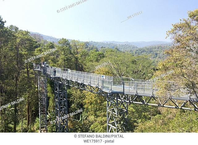 Canopy walkway, queen Sirikit botanic garden, Chiang Mai region, Thailand