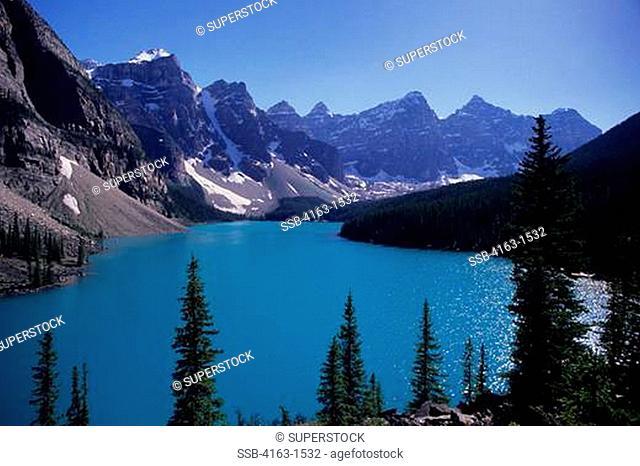 CANADA,ALBERTA,ROCKY MOUNTAINS, BANFF NATIONAL PARK, MORAINE LAKE, LODGEPOLE PINE TREES