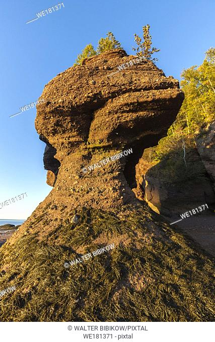 Canada, New Brunswick, Bay of Fundy, Hopewell Rocks, Flowerpot Rocks formed by the great tides of the Bay of Fundy, dawn