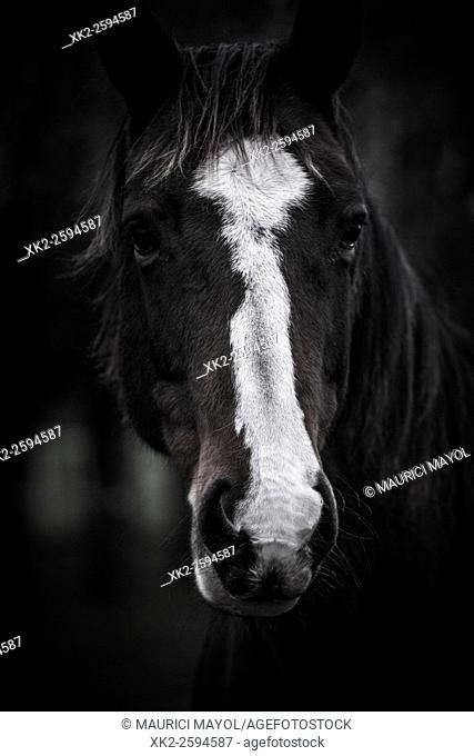 Portrait of Beautiful horse with white spot looking at the camera