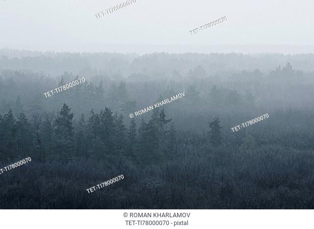 Ukraine, Dnepropetrovsk region, Novomoskovsk district, Forest covered in fog
