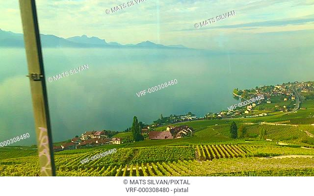 Panoramic View over Lake Geneva and Vineyard on the Mountain in a Sunny Day in Vaud, Switzerland