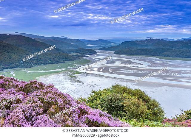 Mawddach Estuary seen from the Panorama Walk above Barmouth, Gwynedd, Wales, United Kingdom, Europe