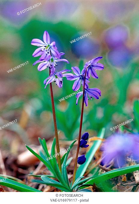 spring, nature, season, flower, plant, film