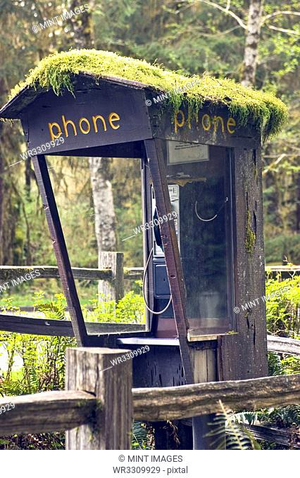 Moss Covered Phone Booth