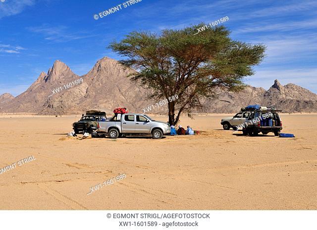 tourist camp under a shady acacia tree, Adrar n' Ahnet, Algeria, Sahara, North Africa