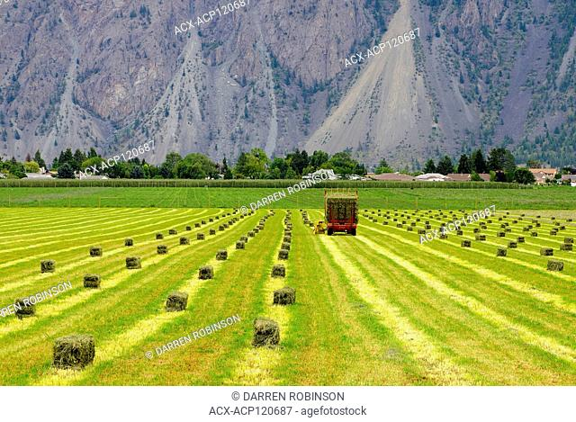 Farmer picks up hay bales during the summer near Keremeos in the Similkameen Valley region of British Columbia, Canada