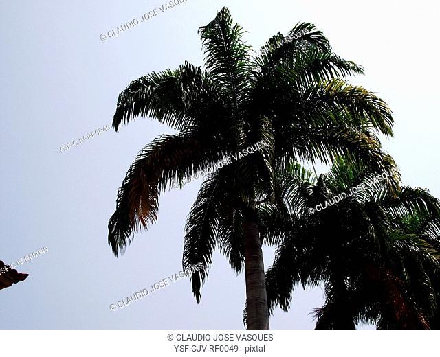 Coconut, Rio de Janeiro, Brazil
