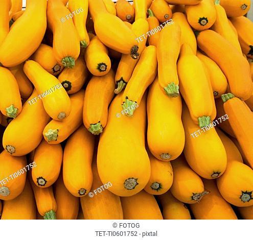 Basket of yellow zucchini