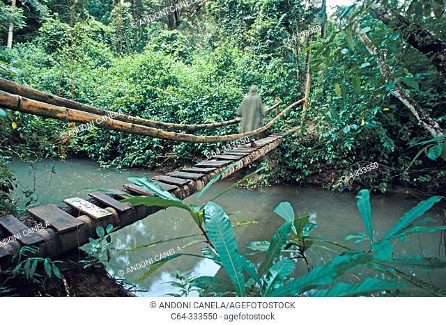 Bridge. Curu. Costa Rica