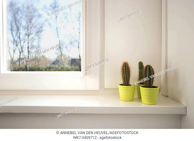 little cactus plant in a green pot stands on, the windowsill, modern design, retro