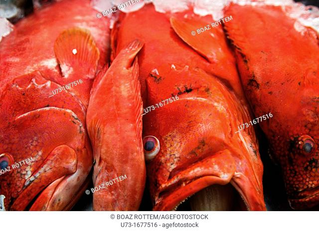 Red Snappers on display in a beach restaurant in Mirissa, Sri Lanka