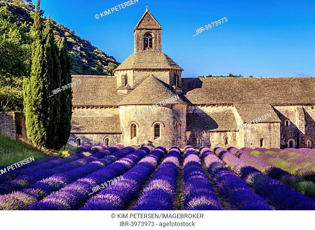The Romanesque Cistercian Abbey of Notre Dame of Senanque, amongst flowering lavender fields, near Gordes, Provence, France