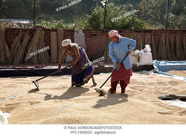 Mature women drying rice - Bhaktapur, Kathmandu Valley, Nepal
