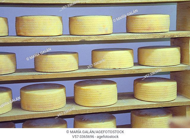 Manchego cheese. Cheese-making industry. Villanueva de los Infantes, Ciudad Real province, Castilla La Mancha, Spain