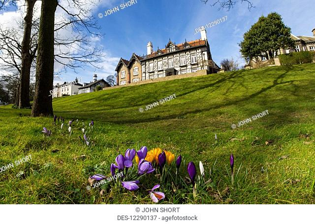 Low angle view of a large house at the top of a grassy hill and tulips blossoming in the foreground; Whitburn, Tyne and Wear, England