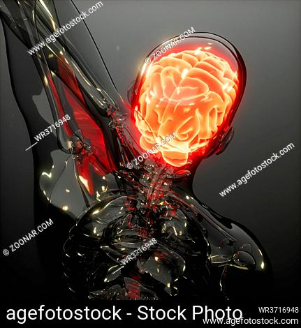 science anatomy scan of human brain glowing