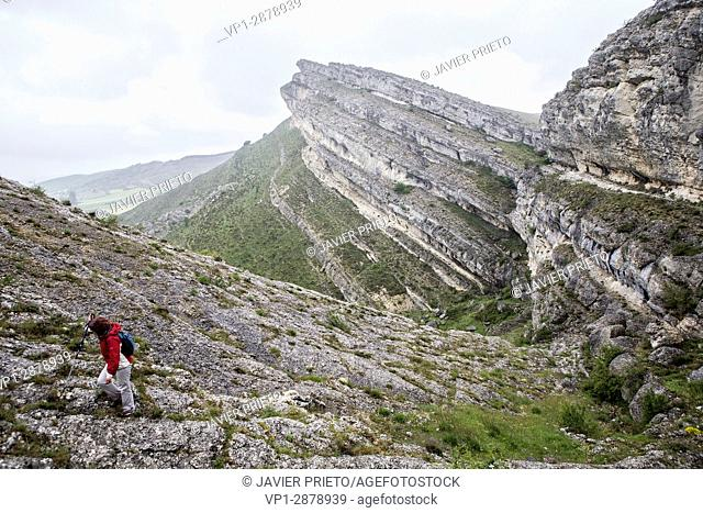Rocky folds in the geological itinerary The Forces of the Earth. World Geopark Las Loras. UNESCO Global Geopark. Locality of Rebolledo de la Torre