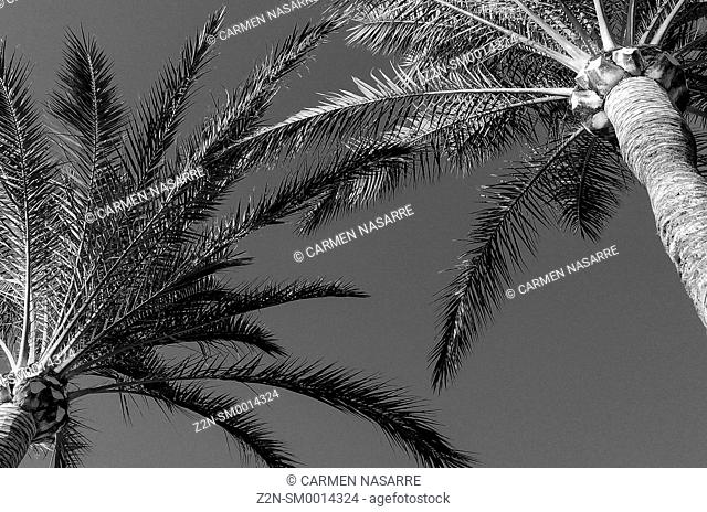 Palm in black and white