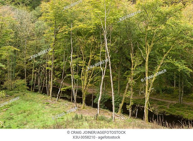 The East Lyn River in Barton Wood in autumn in Exmoor National Park, Devon, England
